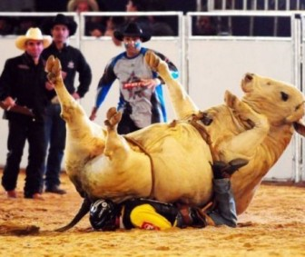 Bull Riding - You&#039;re doing it wrong 002