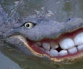 Alligator smiling with false teeth