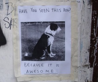 Have you seen this dog, because it is awesome