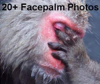 20+ Face Palm Photos