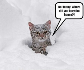 cat is buried in snow
