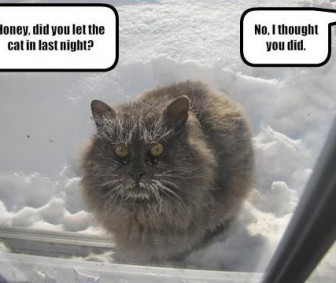 cat left outside in the snow