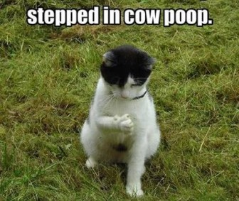 cat steps in cow poop