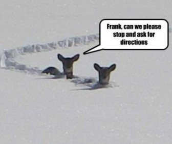 deer need directions