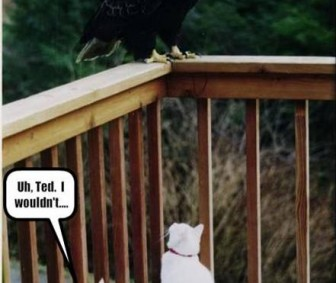 eagle vs cats