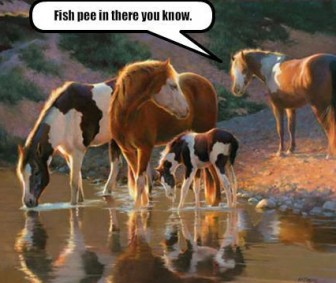 horses in fish pee