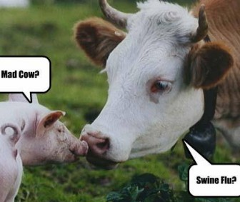 mad cow vs swine flu