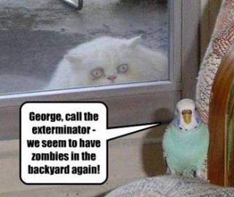 parrot vs zombie cat