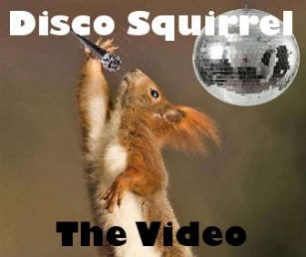 Disco Squirrel - The Video
